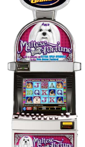 Maltese Fortune video slot machine